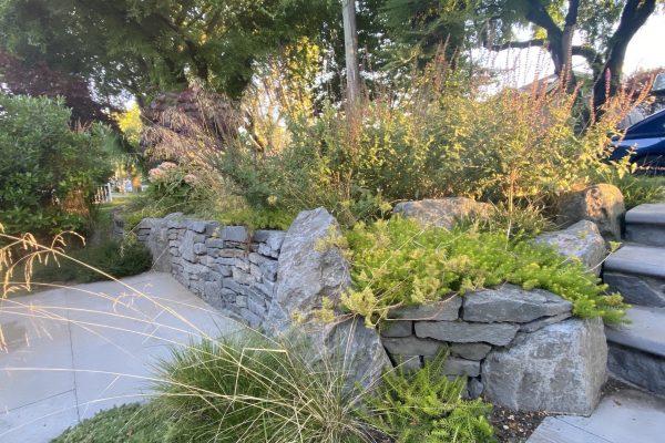 East Vancouver Garden design stonework drystack front garden stone steps bluestone Stephen Stewart