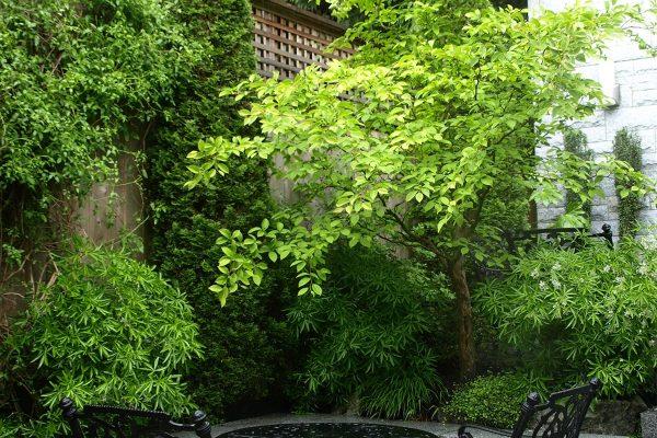 Small garden Vancouver British Columbia Dunbar landscape design outdoor room stone patio